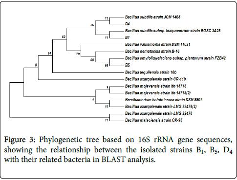 bioremediation-biodegradation-sequences