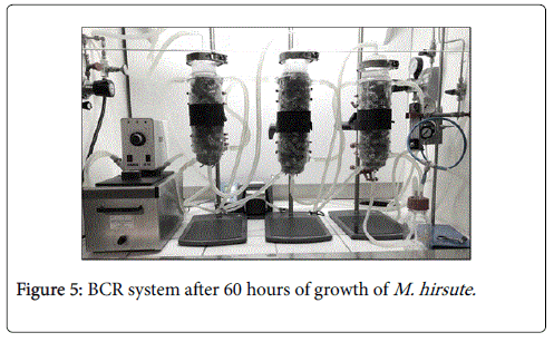 biotechnology-biomaterials-growth