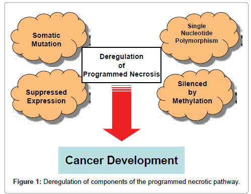 cancer-science-therapy-Deregulation
