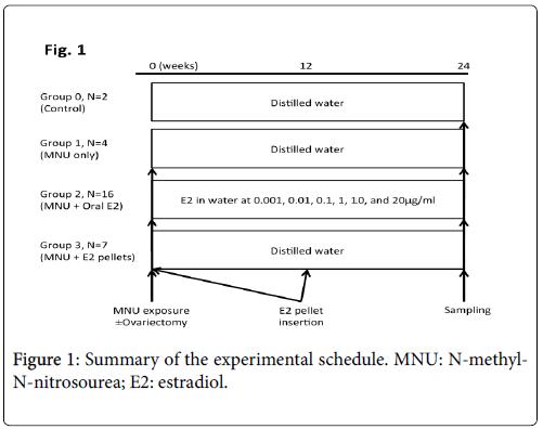 Elevated Serum Levels of Estradiol Induce Endometrial Hyperplasia