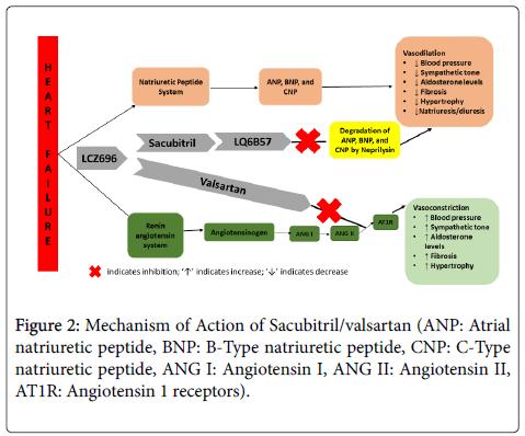 cardiovascular-pharmacology-natriuretic-peptide