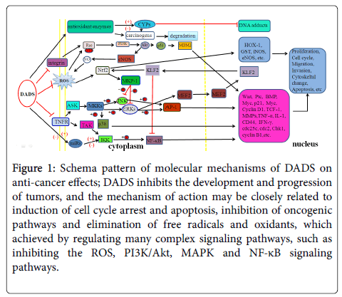 chemotherapy-Schema-pattern
