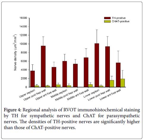 clinical-experimental-cardiology-Regional-analysis