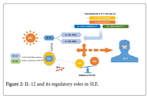 clinical-experimental-pathology-roles-SLE