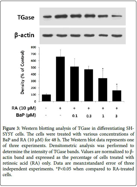 clinical-toxicology-blotting-analysis