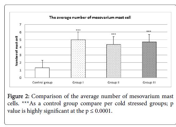 cytology-histology-fibrin-strands-mesovarium-mast