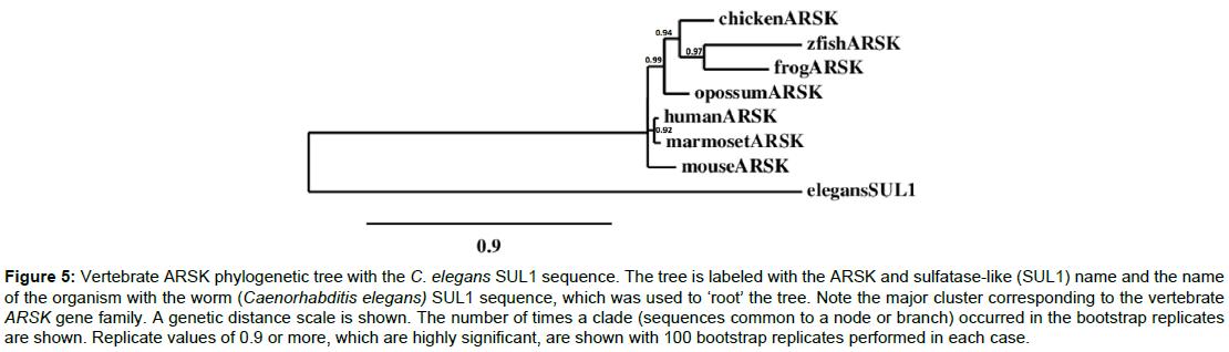 data-mining-genomics-proteomics-Vertebrate-ARSK