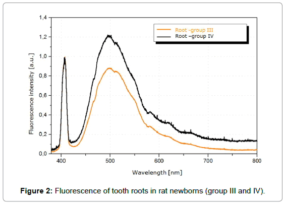 dentistry-Fluorescence-tooth-roots
