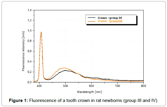 dentistry-tooth-crown-rat