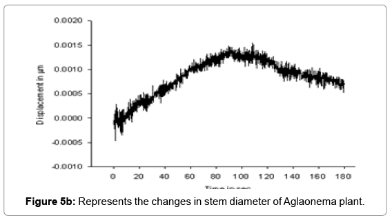 earth-science-climatic-Aglaonema-plant