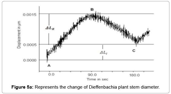 earth-science-climatic-Dieffenbachia-plant