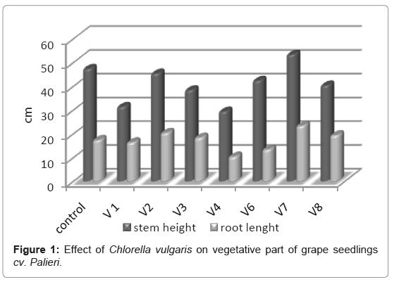 earth-science-climatic-change-Chlorella-vulgaris
