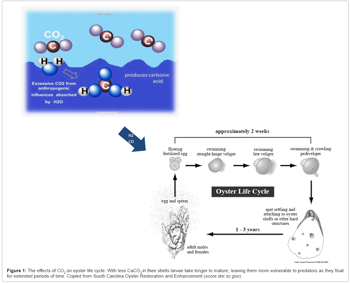 earth-science-climatic-change-oyster-life-cycle