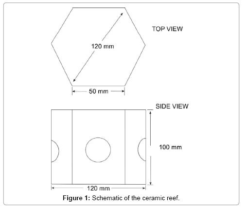 ecosystem-ecography-ceramic