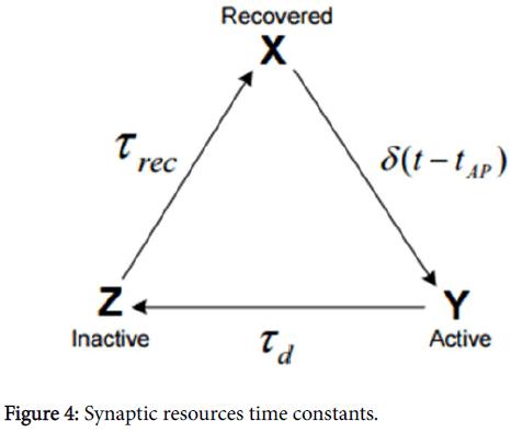 epilepsy-Synaptic-resources-time