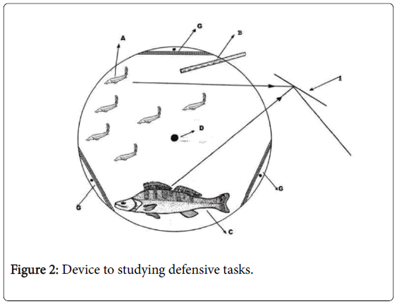 fisheries-and-aquatic-studying-defensive-tasks
