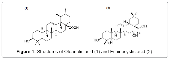 food-processing-technology-Oleanolic-acid