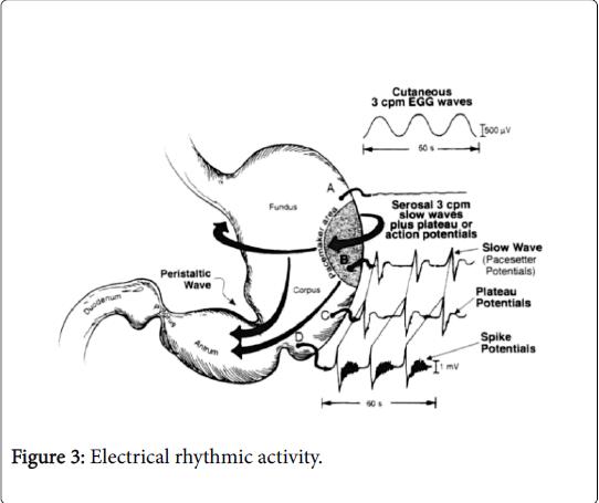gastrointestinal-Electrical-rhythmic