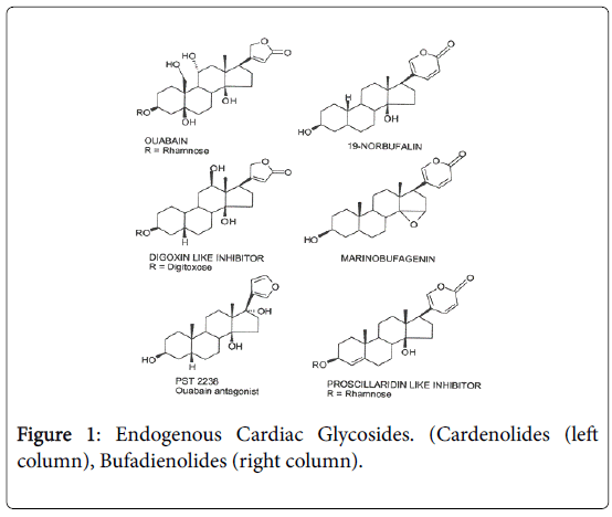 gynecology-obstetrics-Endogenous-Cardiac-Glycosides