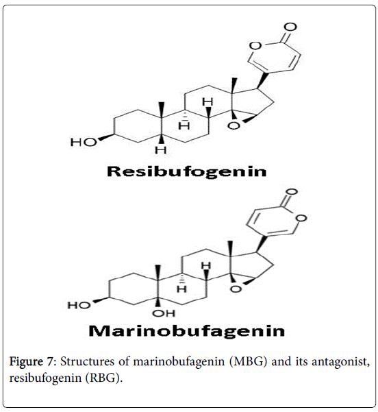 gynecology-obstetrics-marinobufagenin
