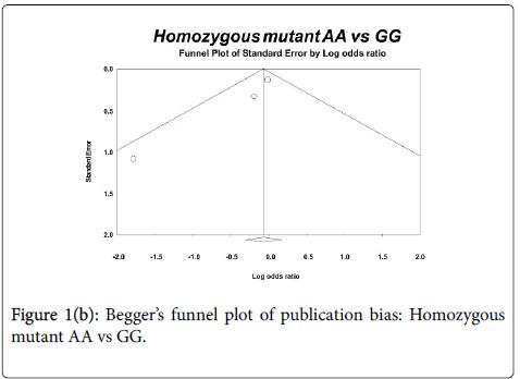 human-genetics-embryology-homozygous