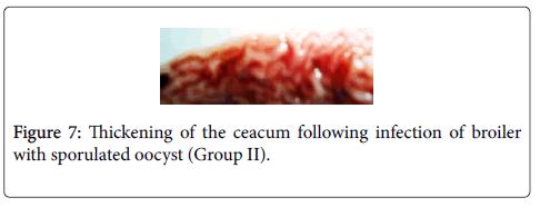 immunobiology-Thickening-ceacum