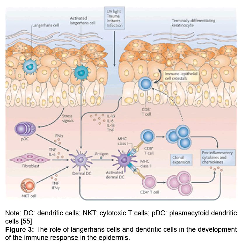 immunology-current-research-langerhans-cells