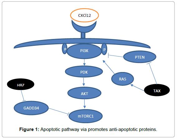 journal-cellular-molecular-pharmacology-anti-apoptotic