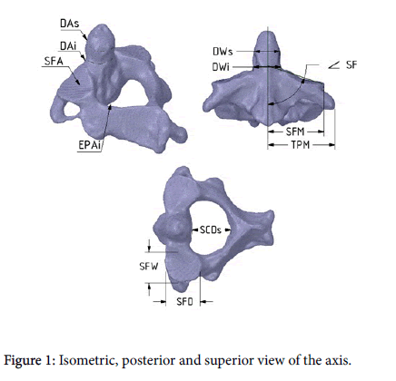 journal-spine-Isometric-posterior