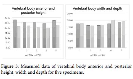 journal-spine-vertebral-body-anterior