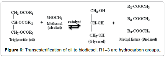 marine-science-Transesterification-biodiesel