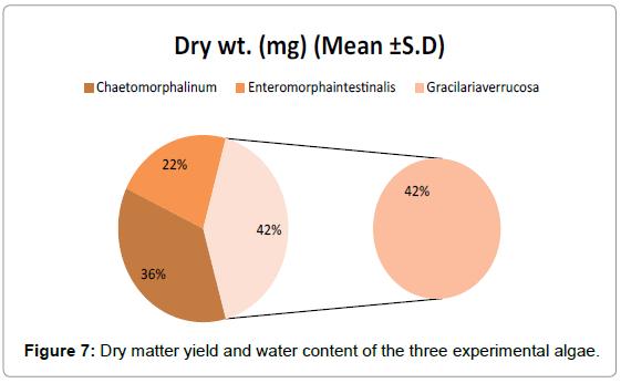marine-science-experimental-algae