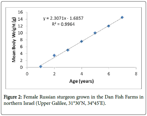 marine-science-research-development-Female-Russian-sturgeon