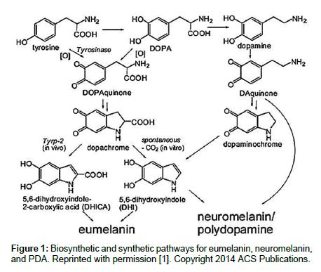 medicinal-chemistry-eumelanin-neuromelanin