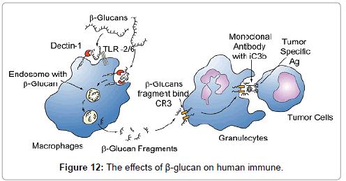 medicinal-chemistry-human-immune-7-302-g012