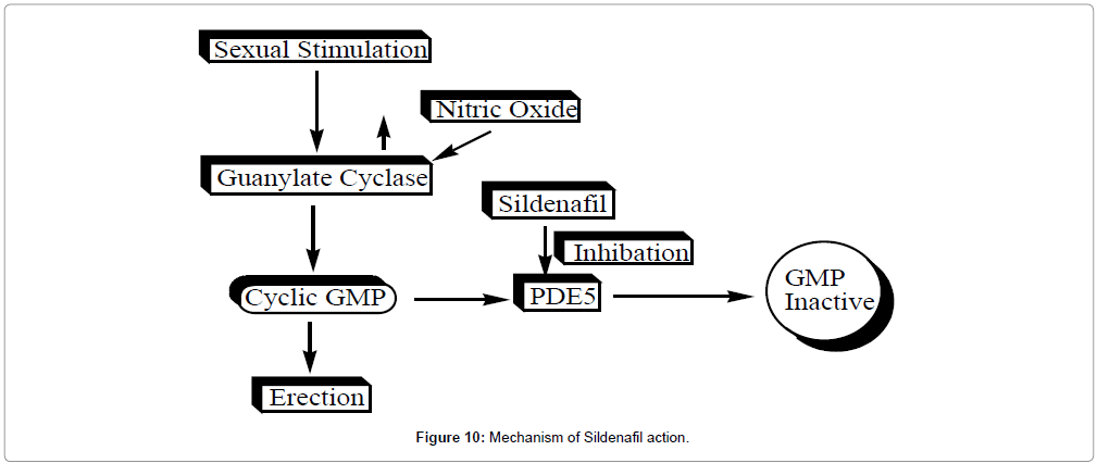 Sildenafil (ViagraTM): Synthesis Step by Step and its