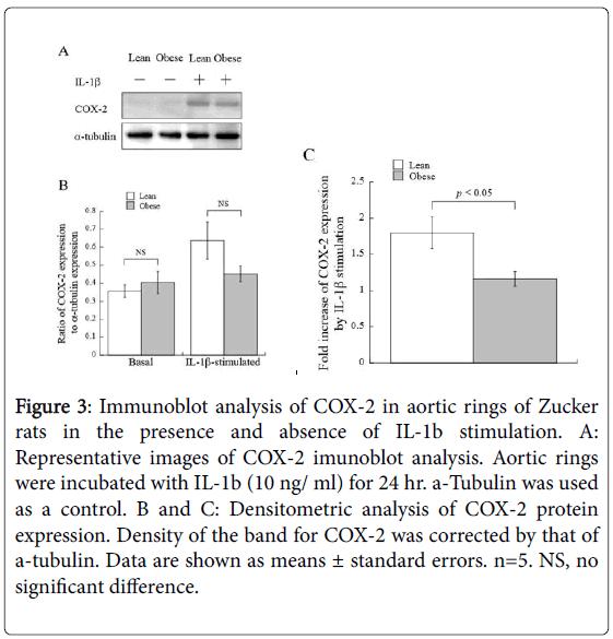 metabolic-syndrome-Immunoblot-analysis