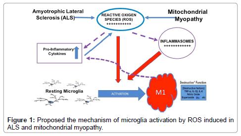molecular-biomarkers-diagnosis-mitochondrial