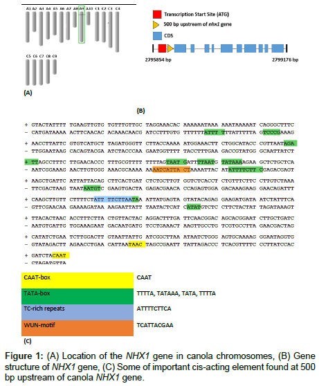 molecular-genetic-medicine-Gene-structure