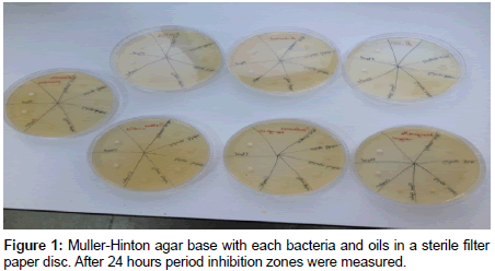 molecular-genetic-medicine-Muller-Hinton-agar