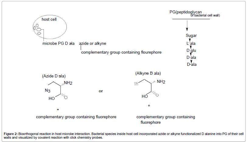 molecular-genetic-medicine-alkyne