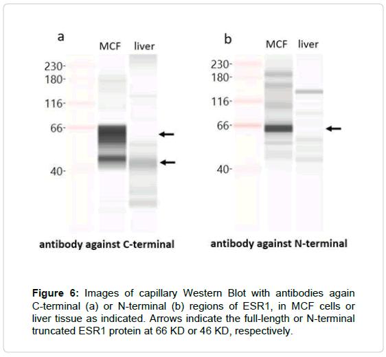 molecular-genetic-medicine-antibodies