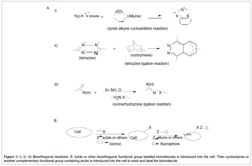 molecular-genetic-medicine-bioorthogonal