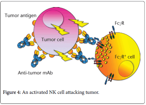 molecular-immunology-cell-attacking