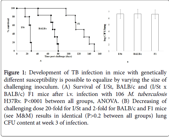 mycobacterial-diseases-infection-mice