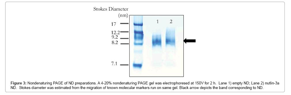 nanomedicine-nanotechnology-markers
