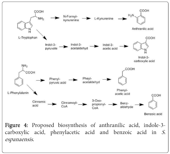 natural-products-chemistry-research-biosynthesis-anthranilic