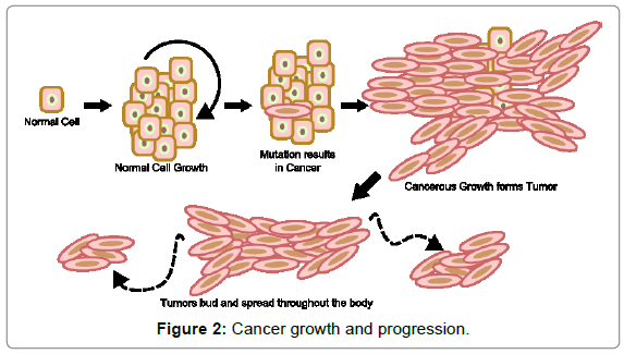 nutrition-food-sciences-Cancer-growth