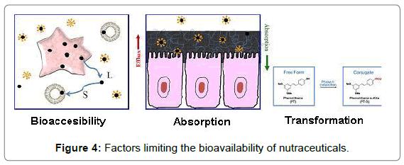 nutrition-food-sciences-bioavailability-nutraceuticals