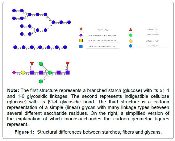 nutrition-food-sciences-fibers-glycans
